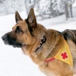 Кучета-спасители от цялата страна бяха оборудвани с проследяващи устройства